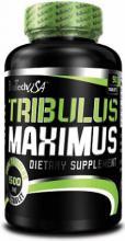 tribulus-maximus